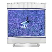 Where's Mine - The Blue Goose Shower Curtain