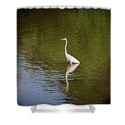 White Egret In Water Shower Curtain