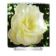 White Rose Petals 2  Shower Curtain