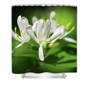 White Honeysuckle Flowers Shower Curtain