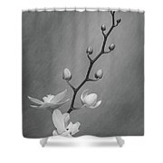 White Orchid Buds Shower Curtain