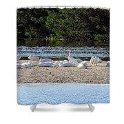 White Pelican Rest Shower Curtain