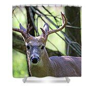 White Tailed Buck Portrait I Shower Curtain