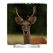 White-tailed Deer - 8282-2 Shower Curtain
