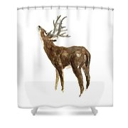 White Tailed Deer Stag With Head Tilted Upwards Shower Curtain