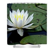 White Water Lilly Shower Curtain