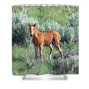 Wild Horse Foal Shower Curtain