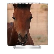Wild Horse Luke Shower Curtain
