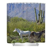 Wild Horses Tonto National Forest Shower Curtain