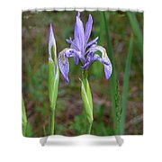 Wild Iris Shower Curtain