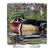 Wild Wood Duck On The Old Mill Pond  Shower Curtain
