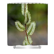 Willow In The Bloom Shower Curtain