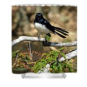 Willy Wagtail #1 Shower Curtain