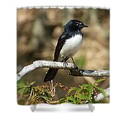 Willy Wagtail #2 Shower Curtain