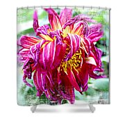 Wilted Dahlia. Shower Curtain