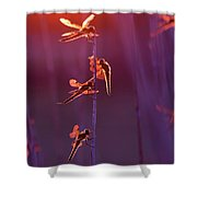 Winged Wonders - Dragonflies At Sunset Shower Curtain