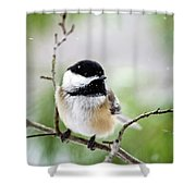 Winter Black Capped Chickadee Shower Curtain