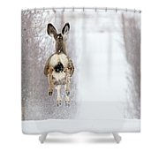 Winter Bounce Shower Curtain