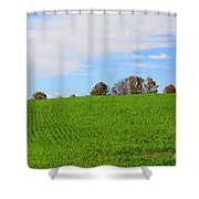 Winter Wheat In October In Southern Ontario Shower Curtain