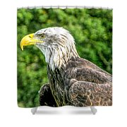 Wisconsin Bald Eagle Shower Curtain
