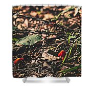 Witch's Hat Mushrooms Shower Curtain