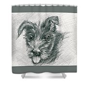 Wolfhound Puppy Sketch Shower Curtain by MM Anderson
