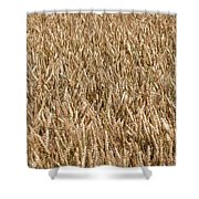 Wonderful Wheat Shower Curtain