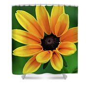 Yellow Flower Black Eyed Susan Shower Curtain