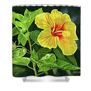Yellow Hibiscus With Bright Green Leaves Shower Curtain