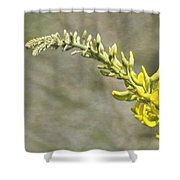 Yellow Lupine Shower Curtain by Carolyn Marshall