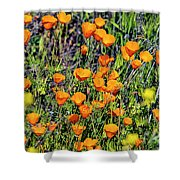 Yellow Poppies Of California Shower Curtain