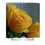 Yellow Roses Shower Curtain by Ann E Robson
