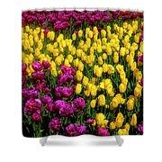Yellow Star Tulips Shower Curtain