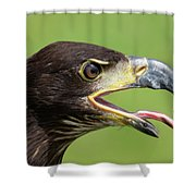 Young Bald Eagle 2 Shower Curtain