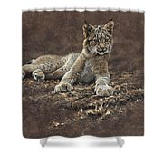 Young Bobcat By Alan M Hunt Shower Curtain by Alan M Hunt