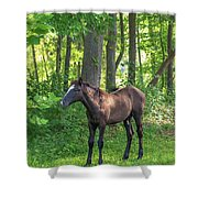 Young Brown Colt Shower Curtain