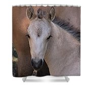 Young Colt Shower Curtain