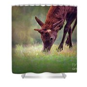 Young Elk Grazing Shower Curtain