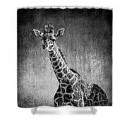 Young Giraffe Black And White Shower Curtain