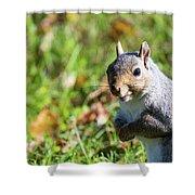 Your Friendly Neighborhood Squirrel Shower Curtain