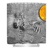 Zebras No 02 Shower Curtain