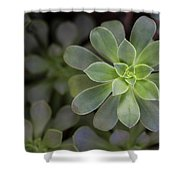 Zen Is Green Shower Curtain by Emily Johnson
