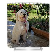 Zoey Towel Shower Curtain