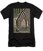 Grazing Zebra At The Buffalo Zoo 2 Men's T-Shirt (Athletic Fit)
