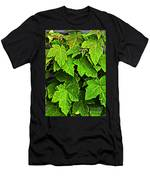 Vibrant Young Maples - Acer Men's T-Shirt (Athletic Fit)