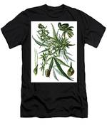 Cannabis Sativa Men's T-Shirt (Athletic Fit)