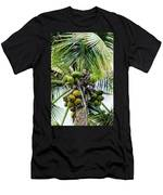Lovely Bunch Of Coconuts Men's T-Shirt (Athletic Fit)