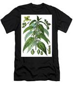 Urtica Dioica, Often Called Common Nettle Or Stinging Nettle Men's T-Shirt (Athletic Fit)