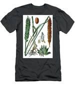 Wheat, Triticum Vulgare Men's T-Shirt (Athletic Fit)