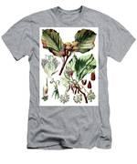 Fagus Sylvatica, The European Beech Or Common Beech Men's T-Shirt (Athletic Fit)
